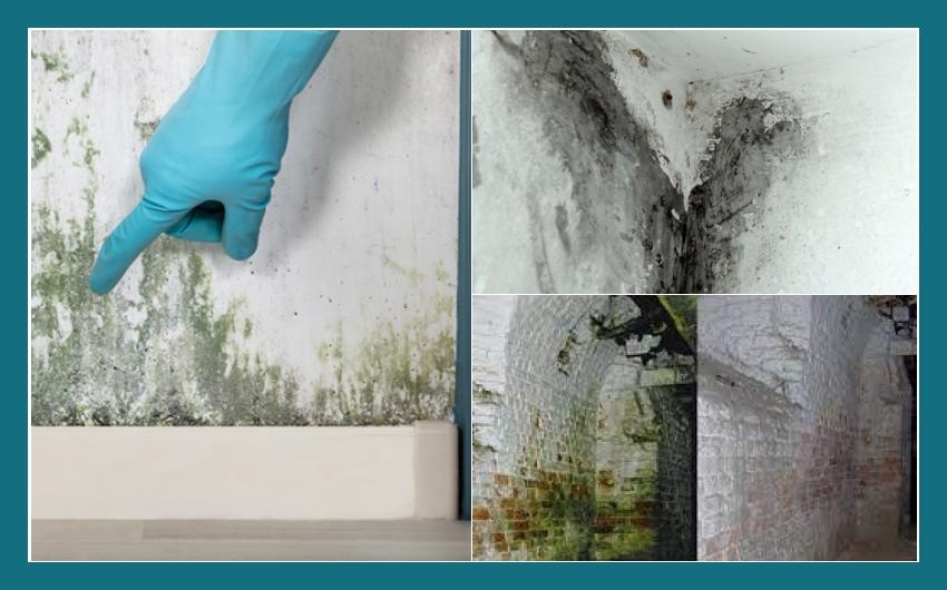 Die Haustrockenleger  Kellersanierung  Lam, Bad Kötzing, Drachselried